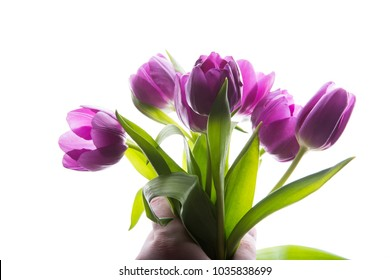 Bouquet of purple tulip flowers in man hand isolated, copy space. Man holding bunch of tulips. copy space for your text.