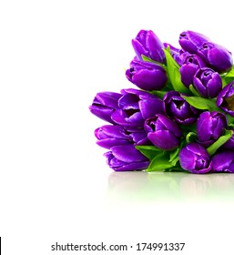 Bouquet of purple tulips on a white background, isolated with copy space. Greeting card.
