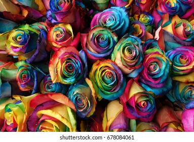 bouquet of rainbow color roses background