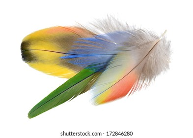 A bouquet of Real MACAW bird Feathers. Natural colors: Red, Yellow, Blue, Pink, Grey. Isolated on white background.