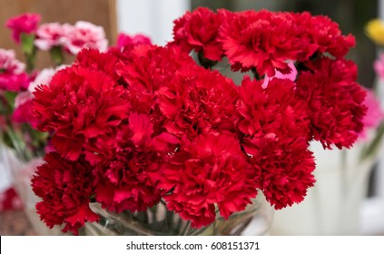 47820 Red Red Carnation Images Royalty Free Stock Photos On