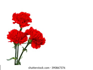 Bouquet of red carnations (Dianthus caryophyllus) on white background with space for text