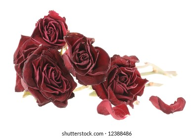 Bouquet of red dried roses isolated on white background (saved with clipping path)