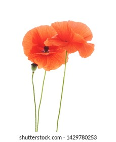 Bouquet of red poppies isolated on a white background.