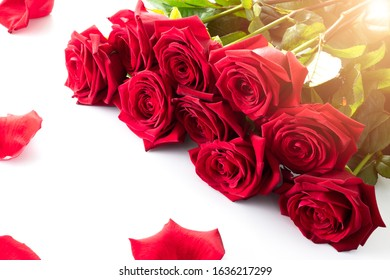 Bouquet of red roses with peatals on a white background for Valentines day. Isolated on white.