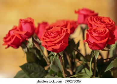 Bouquet of red roses at sunny day