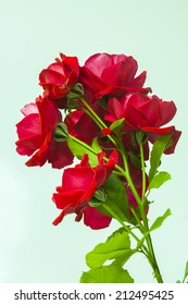 Bouquet of red roses, a symbol for love during years !