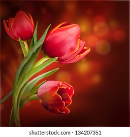 Bouquet of red tulips against a dark background