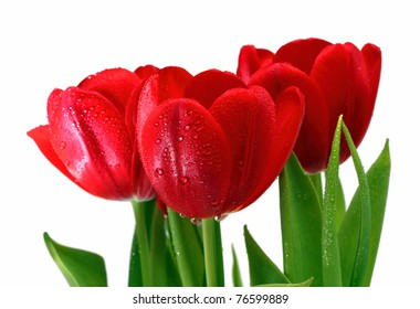 bouquet of red tulips with drops close-up