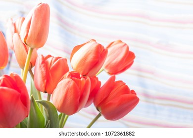 Bouquet of red tulips isolated on colored background close up at left