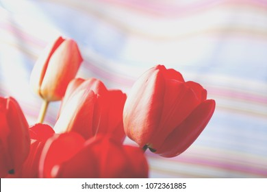Bouquet of red tulips isolated on colored background close up from left side
