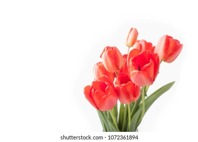 Bouquet of red tulips isolated on white background at right side.