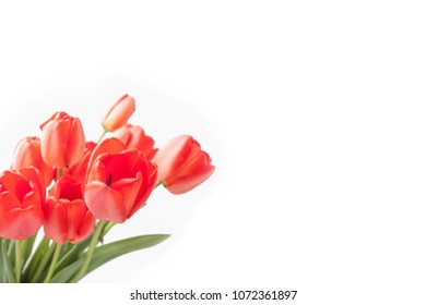 Bouquet of red tulips isolated on white background at left side.