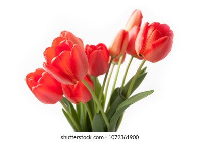 Bouquet of red tulips isolated on white background close up