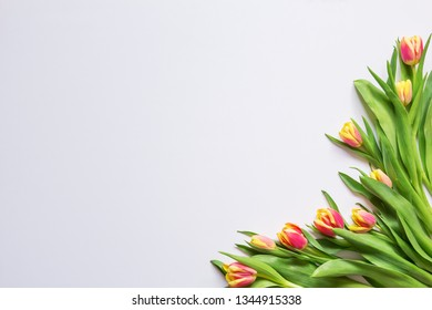 Bouquet of red tulips on a white background, blank