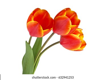 Bouquet of red tulips on a white background