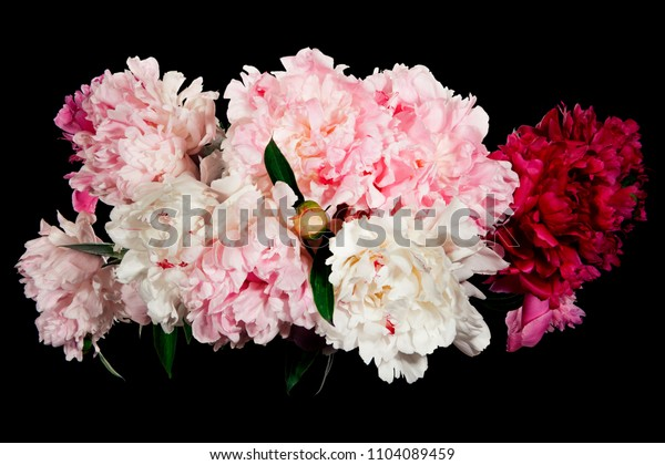 Bouquet of red, white and pink peonies on a black background