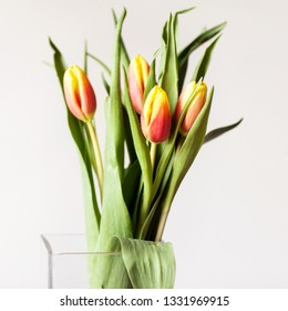 Bouquet of red and yellow young tulips on a white background. It's spring. Holidays. Gift to woman