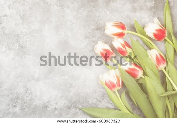 Bouquet of red-white tulips on a light background. Top view, copy space. Toning.
