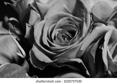 Bouquet roses in black & white