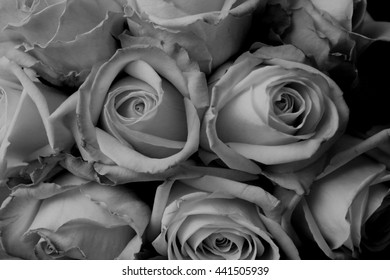 bouquet of roses, black and white