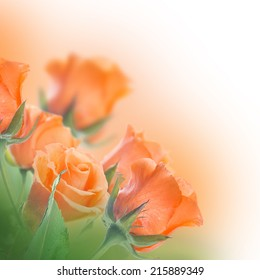 Bouquet of roses, floral background