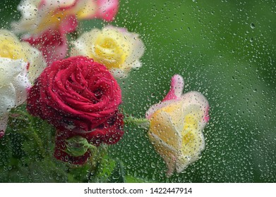Bouquet of roses on the background of a window with raindrop