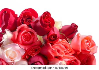 bouquet of roses on white screen