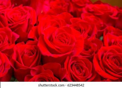 Bouquet of roses. Rose. Red Valentines Day, wedding day background. Rose petals and hearts Valentine gift . Valentines and wedding border. Happy birthday. flowers present.big bunch