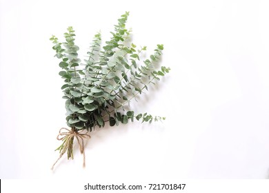 A bouquet of silver dollar eucalyptus