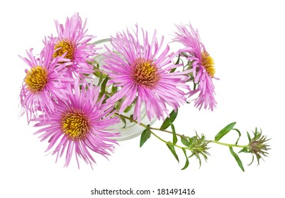 Bouquet of small chrysanthemums on a white background