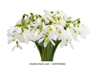 bouquet of snowdrops isolated on white background