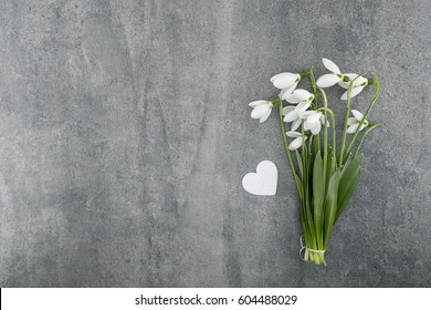 Bouquet of snowdrops on gray stone  background with copy space for message. First spring flowers. Greeting card for Valentine's Day, Woman's Day and Mother's Day holidays. Top view.