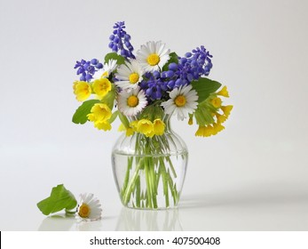 Bouquet of spring colorful flowers in a vase. Romantic floral still life with bouquet of daisy, grape hyacinth and cowslip flowers in a vase. Fine art flower photography.
