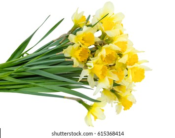 Bouquet of spring flowers - yellow daffodils, isolated on white background