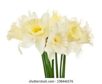 Bouquet of the spring narcissuses, isolated on white