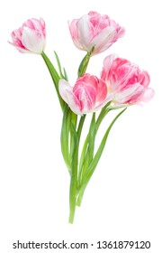 df9ea4f12c0f5 Bouquet of spring pink tulips flowers isolated on white background closeup. Flowers  bunch in air