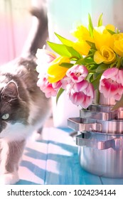 A bouquet of spring tulips of yellow and pink in new saucepans by the window. A gift to a woman. Cozy house. Cat on the window. Card.