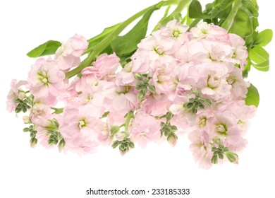 Bouquet of stock