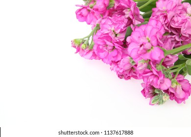 Stock flower images stock photos vectors shutterstock bouquet of stock in a white background mightylinksfo