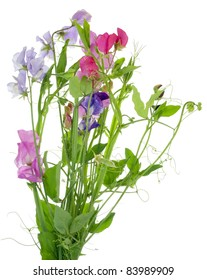 """Bouquet from """"Sweet pea"""" flowers  isolated"""