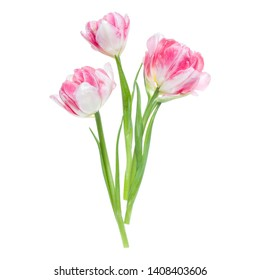 cc71c23da4468 Bouquet of three spring pink tulips flowers isolated on white background  closeup. Flowers bunch in