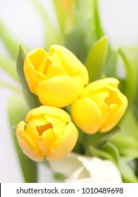 Bouquet of three yellow tulips isolated on white background. View from above.