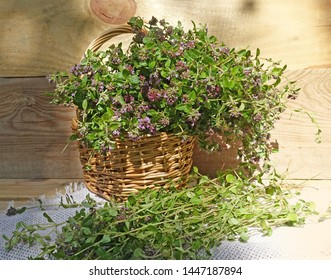 Bouquet of thyme flowers. Thyme harvest. Medicinal herbs