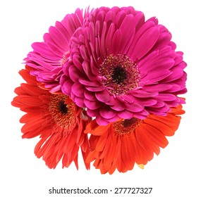 Bouquet of Transvaal daisy