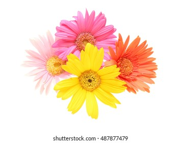 Flower white background images stock photos vectors shutterstock bouquet of transvaal daisypictured bouquet of transvaal daisy in a white background mightylinksfo
