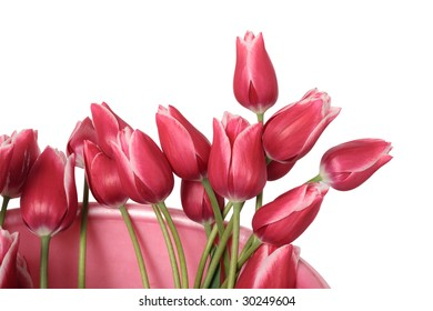 Bouquet of tulip in  bucketful on a white background. Clipping path