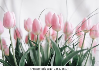 Bouquet of tulip over a white background