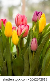 Bouquet of Tulips closeup in beautiful pinks and yellows.