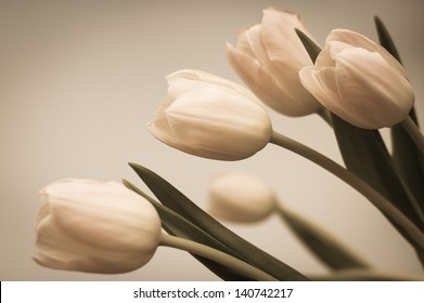 Bouquet of tulips on a neutral background. Retro photo.
